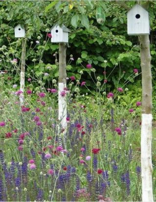 Wildflower-Garden-21